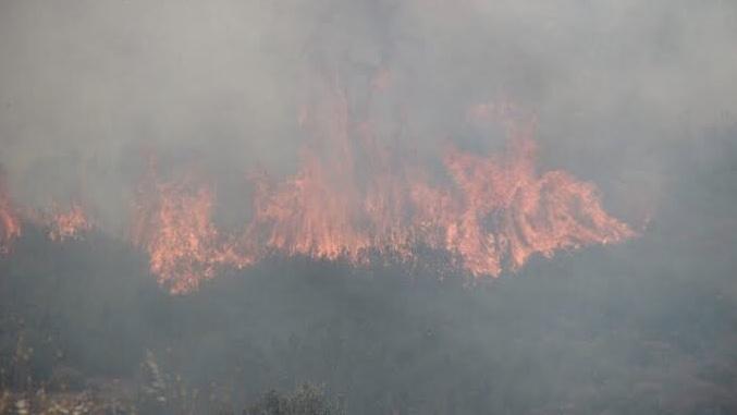 Tarım ve Orman Bakanı Pakdemirli'den, orman yangınları açıklaması