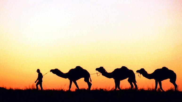 Avustralya'da 5 bin deve acımazsızca vurularak öldürüldü