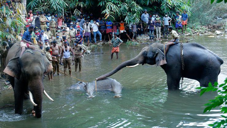 Hindistan'da katledilen fil için 'Elephant Death' etiketi ile tepki yağıyor