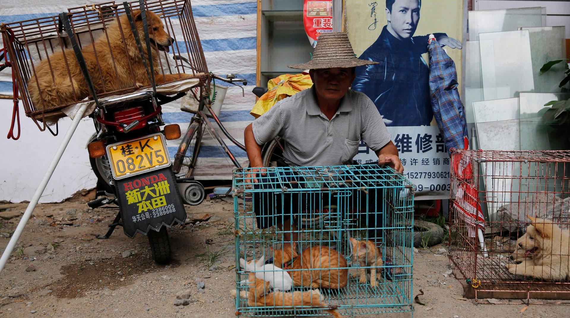 Çin'de 'Kedi Köpek Yemeye' Koronavirüs 'Dur' Dedi