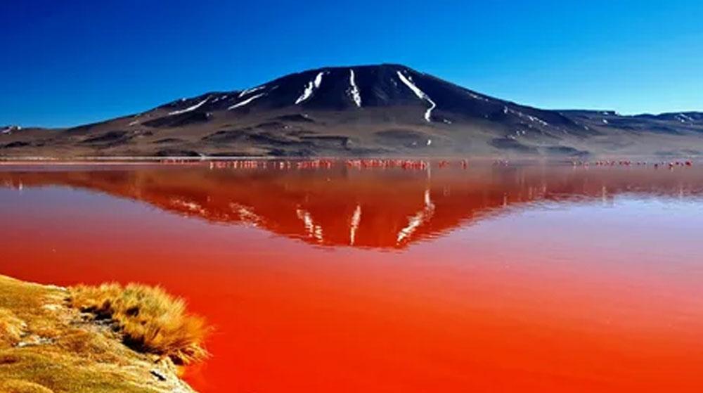 Bu Gölde Yüzülmez! Dünyanın En Ölümcül Gölü: Natron