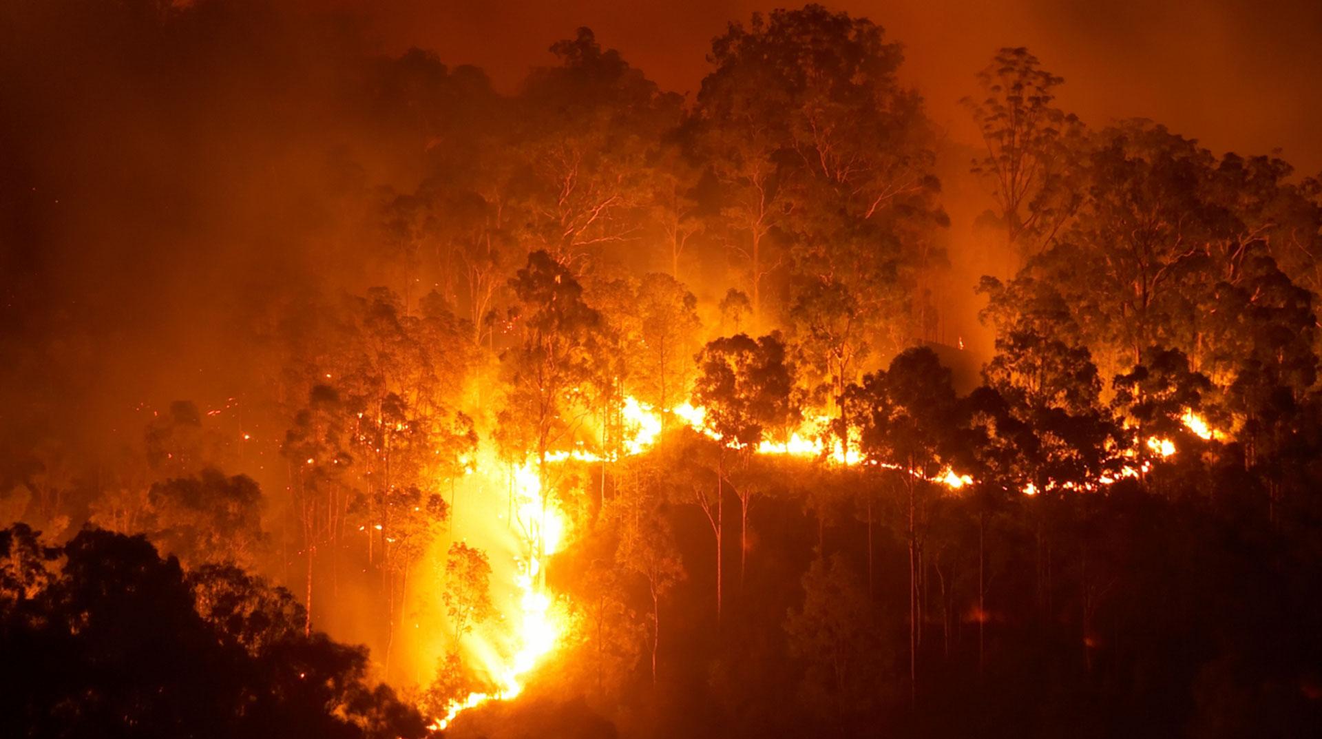 Avustralya'da Orman Yangınları: OHAL İlan Edildi
