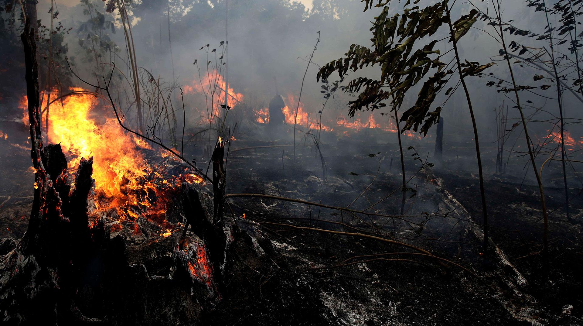 İhmal Sonucu, Ormanlar Kül Oluyor, Geçen Yılın Rakamı: 6500 Hektar