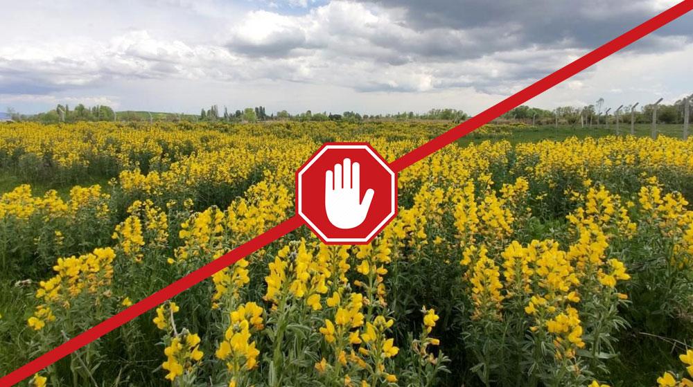 Bu Çiçekleri Sakın Koparmayın!