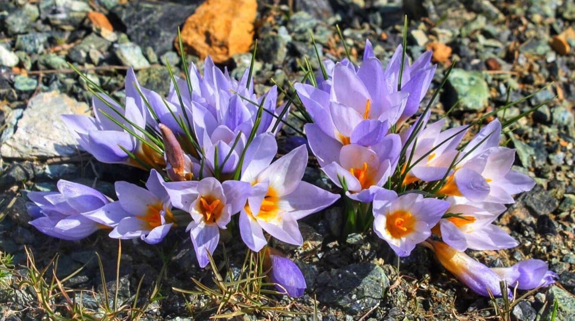 Kocaeli'de Endemik Bitki Türü Keşfedildi