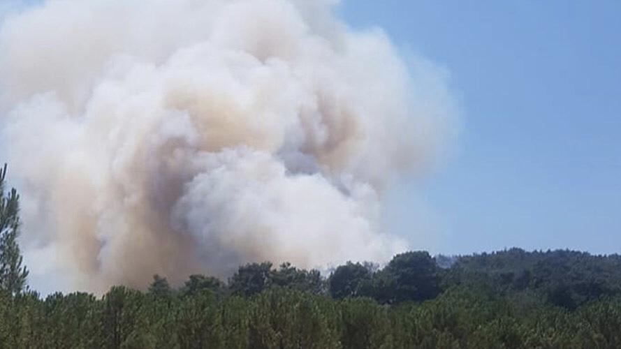 İzmir'in Menderes ilçesinde orman yangını