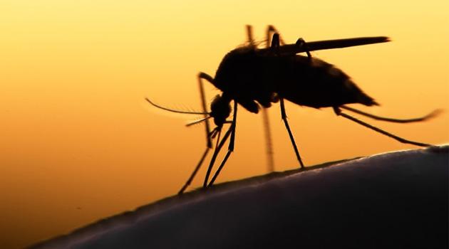 Yemen'de selden sonra başlayan Chikungunya Ateşi'nden 50 kişi öldü