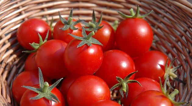 Rusya, 'kota dolumu nedeniyle' Türkiye'den domates alımını durdurdu