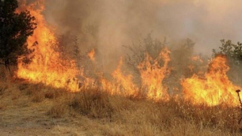 Hatay'da orman yangını... 10 hektarlık alan zarar gördü