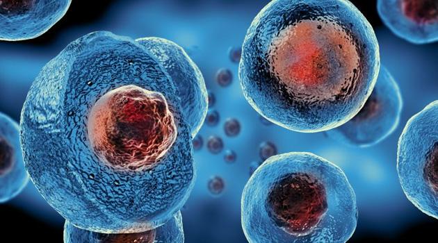 Dünyada ilk kez yeni doğan bebeğe karaciğer tedavisi için kök hücre nakledildi