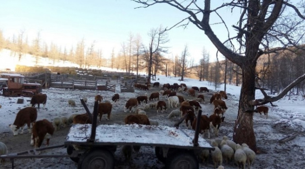 Kazakistan, hayvan ihracatını yasakladı