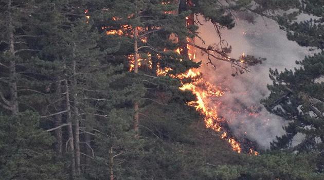 Kütahya'da orman yangınında 2 hektar alan zarar gördü