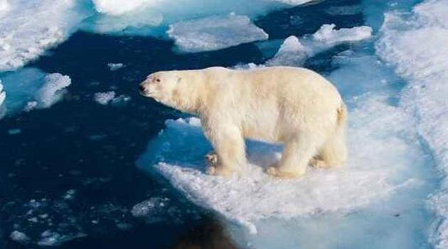 Okyanuslarda rekor sıcaklık