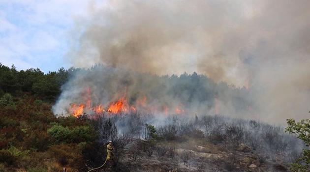 İstanbul Aydos'ta ormanlık alanda yangın