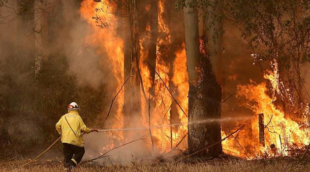 Modern tarihin en büyük felaketlerinden biri: Avustralya'daki orman yangınlarında yaklaşık 3 milyar hayvan etkilendi