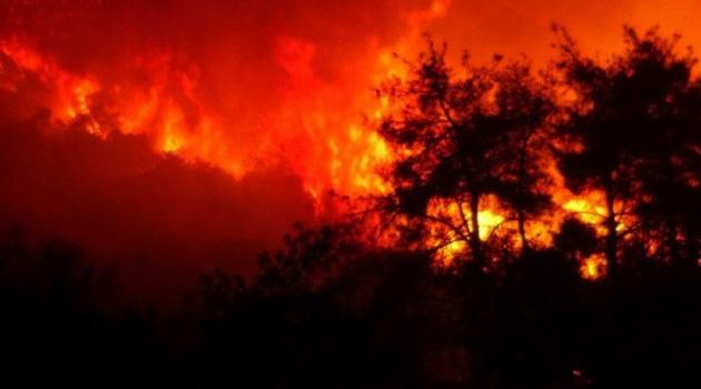 Geçen yıl 6 bin 500 hektar orman kül oldu