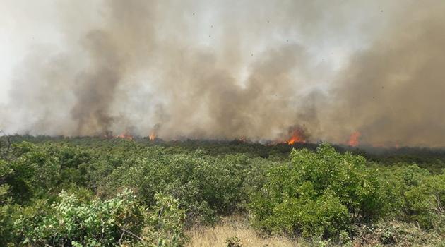 Samsun'da sazlık alanda çıkan yangın ormana sıçradı