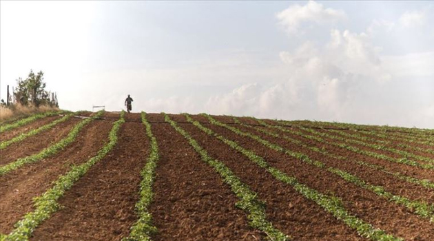 İşgalci İsrail, Gazze'de tarım arazilerine zarar veriyor