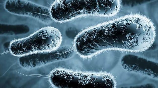 Tarihin en ölümcül hastalığı veba Çin'de meydana çıktı