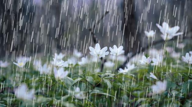 Ayetlerle Yağmurun Oluşumu