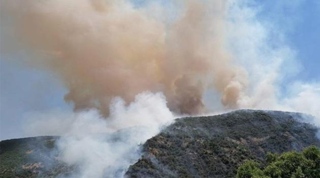 Tekirdağ'da korkutan yangın: Zeytinlik küle döndü