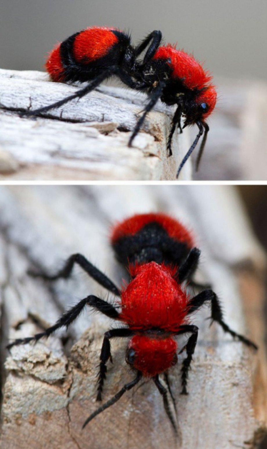 Muhteşem Renkleriyle Dikkat Çeken Canlılar