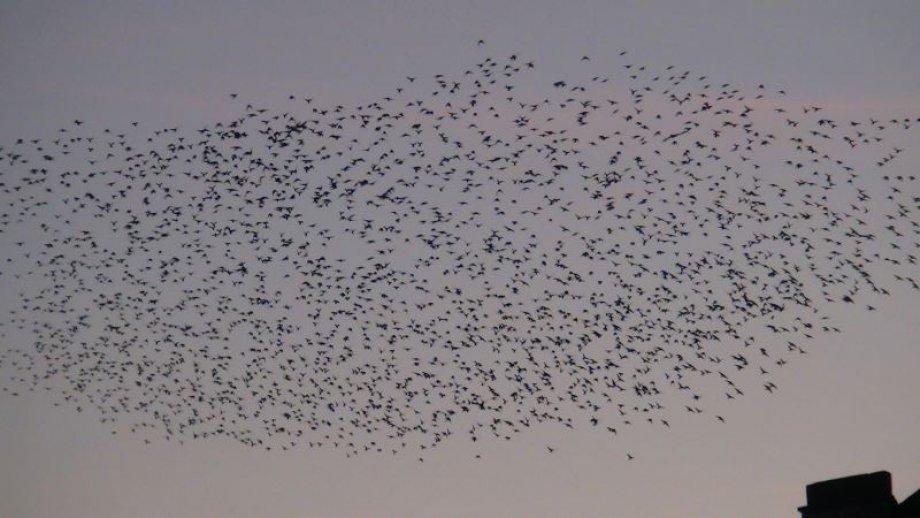 ''Üzerlerinde kanat çırpan dizi dizi kuşları görmezler mi?''