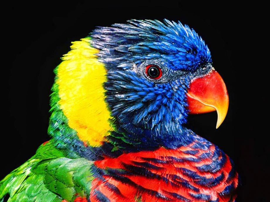 Sanatçının muhteşem eseri: Papağan