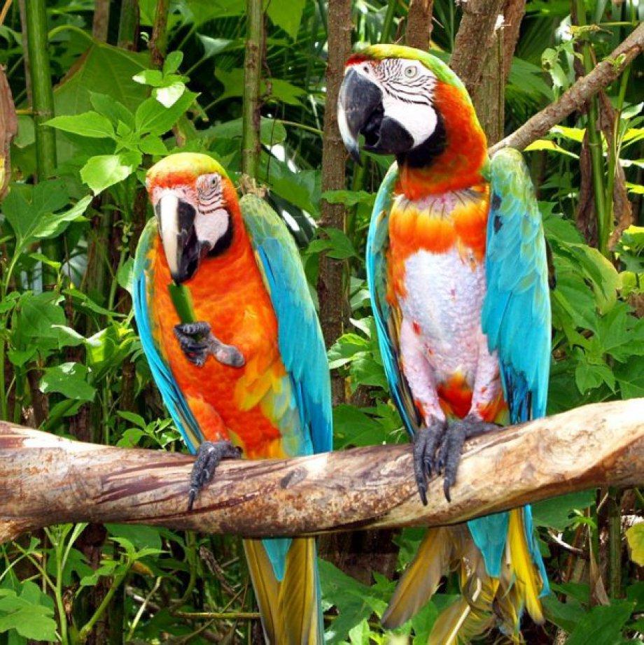 Dünyanın en renkli kuşları | Bakmadan Geçme...