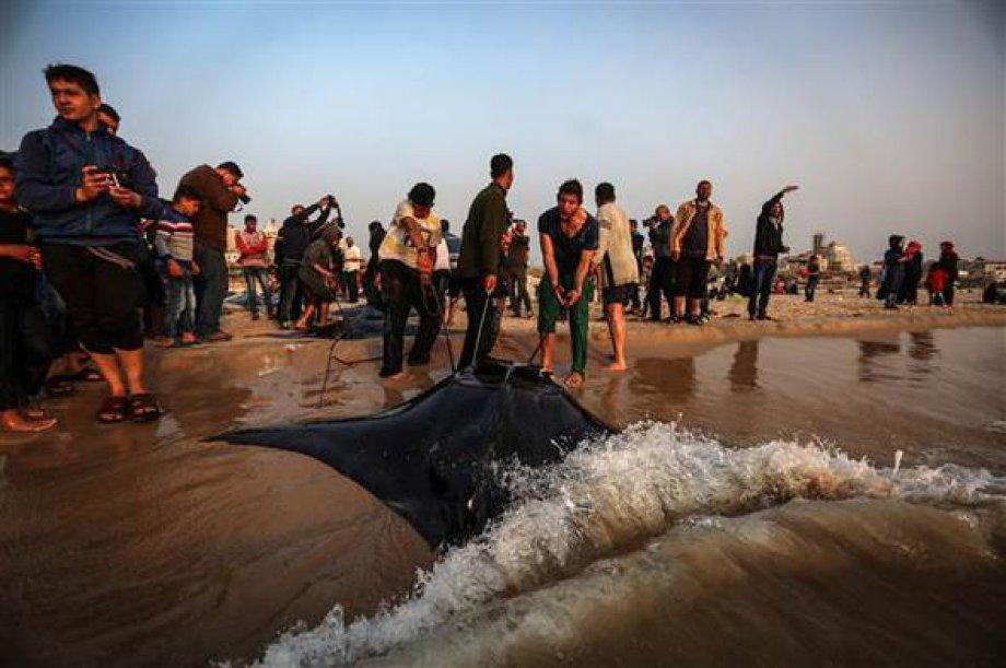 Gazze Sahilinde Balık Bereketi
