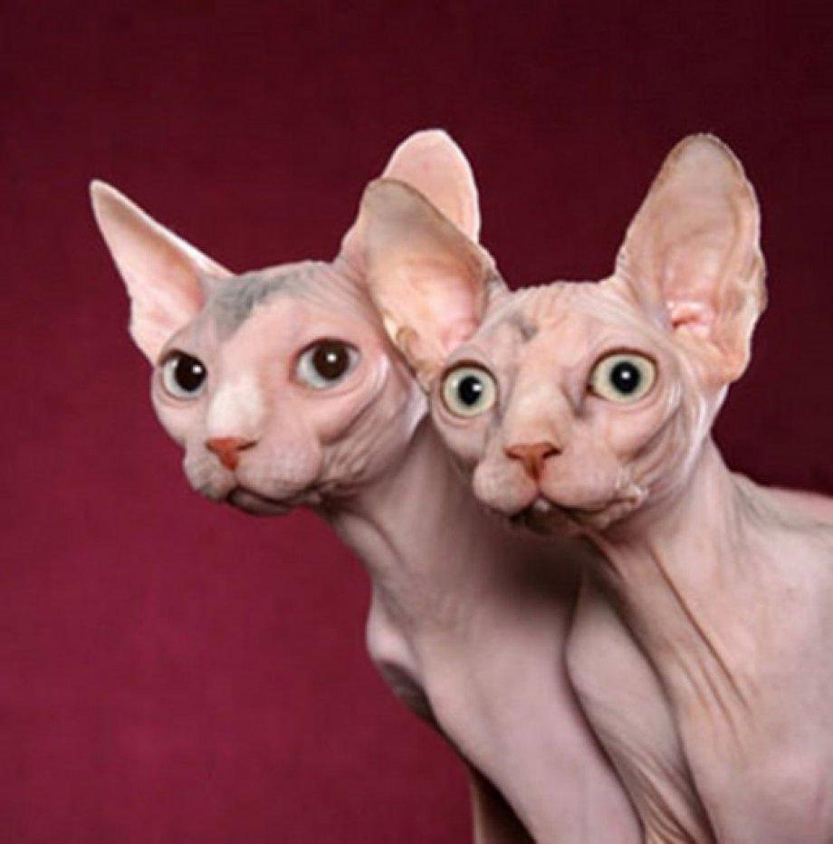 Birbirinden tuhaf hayvanlar