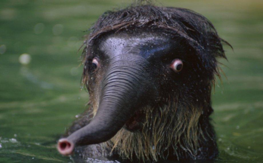 Hayvanların En Komik Şaşkın Halleri