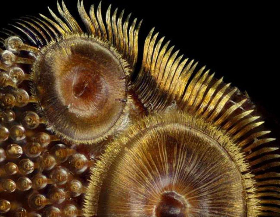 2015 Yılı Mikroskobik Fotoğraf Yarışmasında Dereceye Giren 20 Fotoğraf