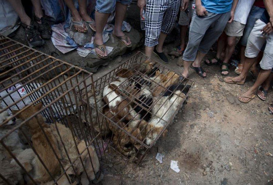 Çin'de Hayvan Katliamı: 40 bin köpek kesildi