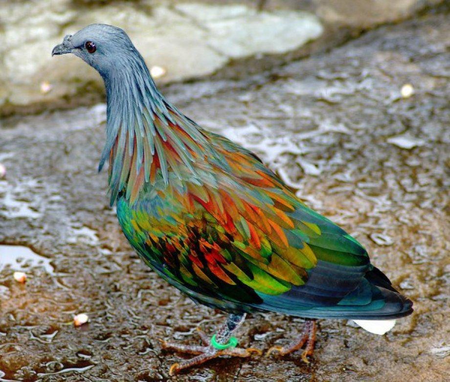 Alışılmadık Renkli Hayvanlar