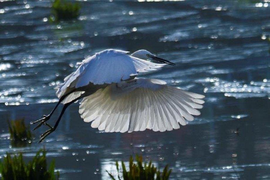 Uluabat Gölünde Tefekküre Şayan Görüntüler