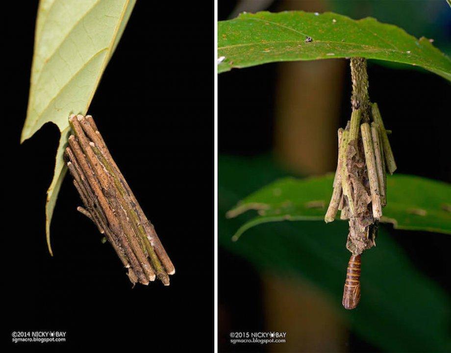 """Böcek Yuvalarının Mimarisi """"Subhanallah"""" dedirtiyor"""