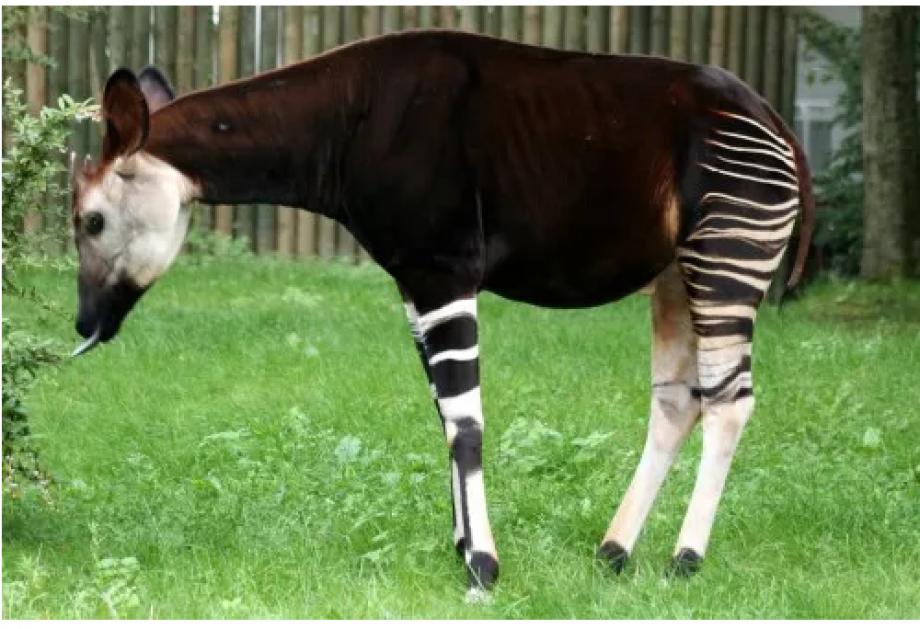 İşte Pek Bilinmeyen 11 Hayvan Türü