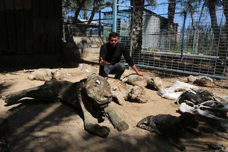 İsrail Zulmü Hayvanları Katletti
