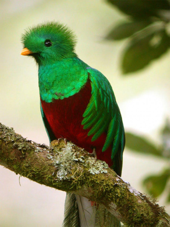 Subhanallah diyeceksiniz! Dünyanın en güzel 25 kuşu