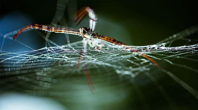 Allah'ın Muhteşem Sanatının Örümcek Ağında Tecellisi