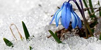 Bahar Müjdeleniyor