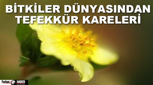 Bitkiler Dünyasından Tefekkür Kareleri