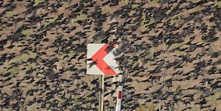 Bursa'da kuşlar yolu kapattı