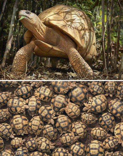 Nesli tükenmekte olan hayvanlar fotoğraflandı