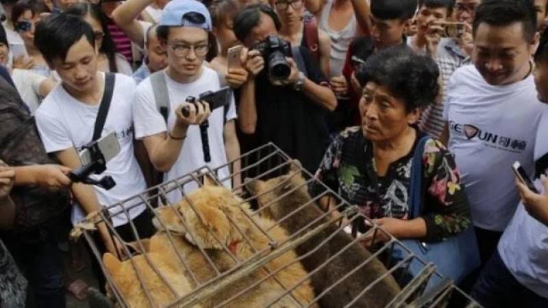 Medeniyetten yoksun Çin'de köpek eti festivali tepkilere rağmen başladı