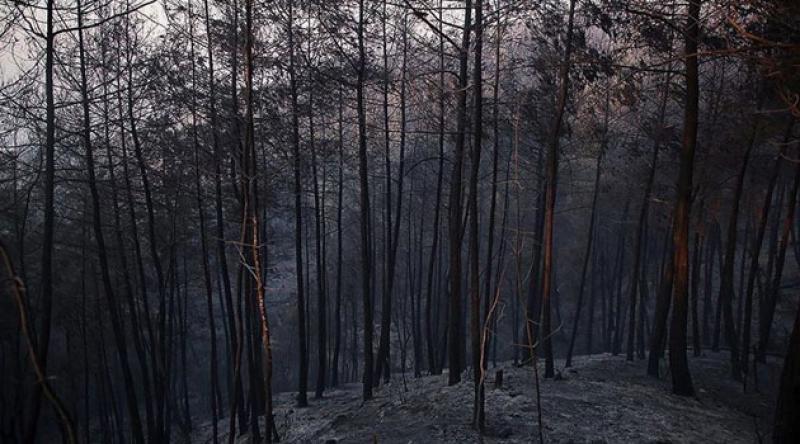 O ilçede orman yangınında zarar gören alan yeniden ağaçlandırılacak
