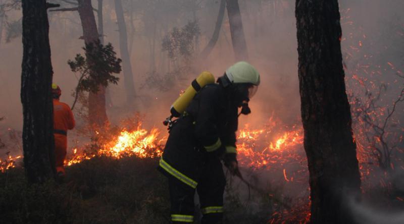 2019'da 2 bin 688 orman yangını çıktı, 11 bin hektar alan kül oldu