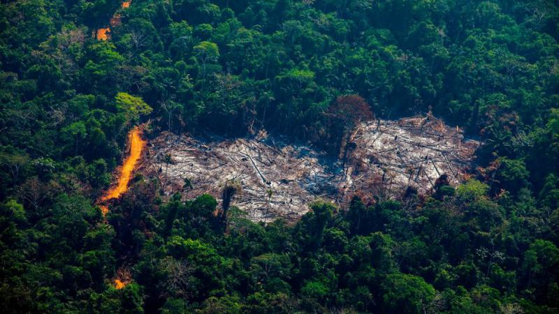 Amazonlar'daki orman kaybı son 12 yılın en yüksek düzeyinde