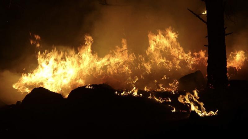 Balıkesir'deki yangında 50 dönüm kızılçam ormanı zarar gördü